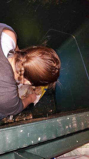 Annika klev ner i ett av sopkärlen för att rädda hamstrar. Bild: Maria Björklund