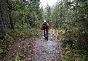 MTB-åkare, du får inte göra vad du vill med skogen. Foto: Vidar Rudd/TT