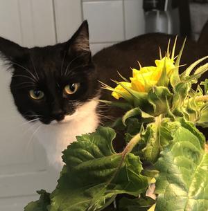 Cleo är en väldigt lugn katt som älskar att leta gömställen! Hon är smidig och sover för det mesta, men när jag är hemma med henne så missar hon aldrig chansen att gosa! Hon är väldigt kärleksfull mot hela min familj. Bild: Anna Ek Femzén