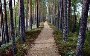En del av den väg deltagarna kunde springa, här vid Lilla Rutsberget.Foto: Urban Rossäng.