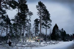 Vad gäller om skogen blir för gles efter stormen? Ska man kompletteringsavverka för att kunna plantera, frågar Håkan Elmquist.