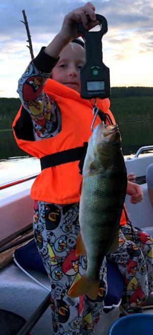 Johan Sundemyr är en av alla unga fiskare som fått fin fångst i årets Fiskeliga. Här har Johan landat en abborre som vägde 1,1 kilo ur Målingen, Älvros.