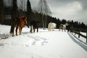 På instagramkontot @horsebackmemories kan du följa Maria och Klara.