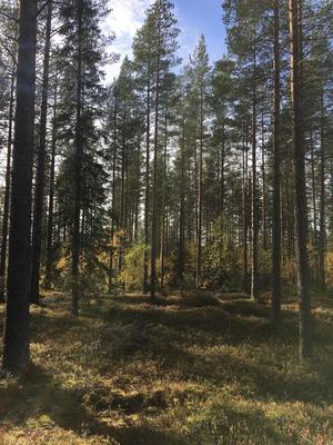 En skogsfastighet i Fällkäl i Örnsköldsviks kommun såldes för 4,3 miljoner kronor. Foto: LRF KONSULT