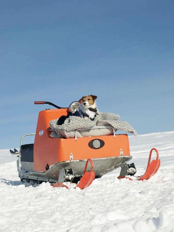 Från Våffelstugan på Vemdalsskalet påskhelgen 2015. Skotern är en Ockelbo 300, årsmodell 1968. Hunden heter Stina. Foto: Julia Abrahamsson