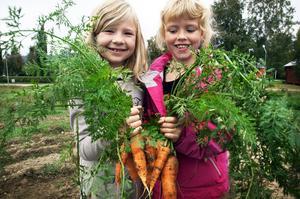 Elever odlar grönsaker på Resele skola. Arkivbild.