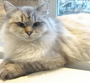 401) Det här är Elsa! Hon är en glad och busig sju månaders liten hona. Namnet har hon fått från filmen Frost, utav sin två-åriga matte Greta. Foto: Kristina Elfversson