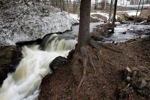 Vårfloden och snösmältningen kan komma att missfärga dricksvattnet i det kommunala VA-nätet. Det meddelar Ånge tekniska förvaltning. Foto: Mårten Englin