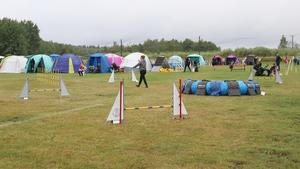 """Det var tredje året som agilitytävlingen """"Augustisnurren"""" ägde rum på idrottsplatsen i Fellingsbro. Tidigare har de varit i Frövi."""