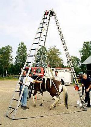 Foto: MATHIAS FORSLÖF Hästlyft. En drygt 350 kilo tung ridhäst lyftes utan några som helst problem när den nya djurhissen provades vid Lerviks ridklubb nyligen.