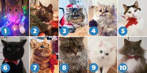 Tio kandidater – men bara en kan bli Årets Lussekatt 2019.