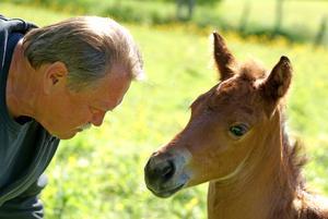 """""""Nyfött föl i solskensväder, kan det bli mera sommar? På bilden ses 'mannen som talar med hästar' Anders Lake med veckogamla Smart Lil Zanny."""" Foto: Karin Frenander Lake"""