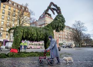 Märta Johanson och hunden Lisa,  inspekterade julbocken Julius som stod klar i all sin prakt på Järntorget runt lunchtid idag.