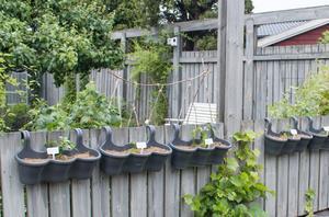 Växtlighet i blomlådor som hänger på staketet.