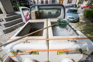 En tank full med lax, den andra tom. Den tömdes tidigare under dagen vid hemlig plats. – För att laxen ska hinna sprida ut sig längs hela ån, säger Urban Pettersson.
