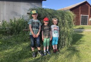 Bröderna Ebbe, Ture och Malte Lindell är på sommarvistelse i Fröste hos mormor och morfar Inga-Lill och Ingemar Gustafsson. Då passade de på att bärga hö enligt gammal metod. Resultatet ser vi här. Bra jobbat!