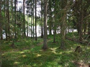 Mellanljusnans naturreservat utökas. Bild: Länsstyrelsen Gävleborg