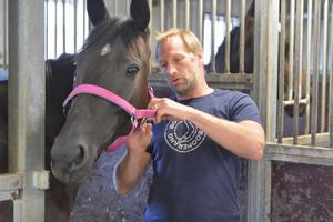 Dan Hjelm tar hand om en av travhästarna.