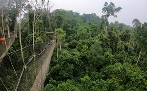 Kakums nationalparks regnskog är mäktig, men liten. Det känns som en turistfälla och om du vill se riktig natur ska du bege dig till norra Ghana i stället.