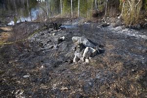 Det var en yta på cirka 200 x 50 meter som brann.