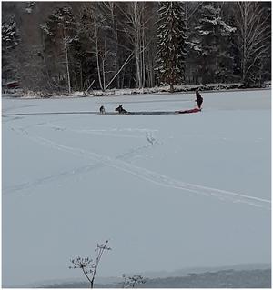 Räddningstjänsten kunde rädda skogens drottning upp ur isvak vid Faxälvens mynning. Foto: Räddningstjänsten