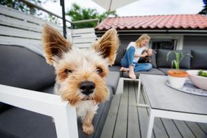 Låga och mjuka möbler för människor och hundar.