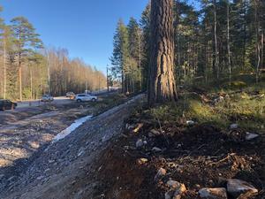 Fura med 50 procent av rotsystemet bortschaktat. Trädet står vid arbetet för nya avfarter mellan Glomman och Norrköpingsvägen.