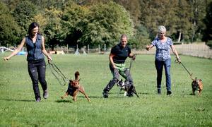 I England och USA är motions- och tävlingsformen canicross vanlig. Här provspringer arrangörerna till Kringeltassen med sina hundar.