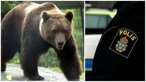Polisen kommer att närvara vid besiktning av skjutna björnar.
