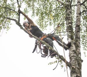 Säkerheten är viktig och Petra Pavlovská har dubbla säkerhetsanordningar.  En lång gren tas ner i sektioner , så att den inte ramlar på huset under grenen.