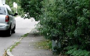 Korsning med träd och häckar som hänger ut över trottoaren. Inte tillåtet, enligt plan- och bygglagen.