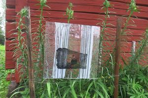 I Tallbo kan man hitta konst även i blomsterlandet.