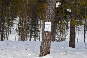 Nu ska skogen vid Drevdagen avverkas.