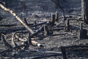 Bränderna härjar fortfarande i Ljusdals kommun.
