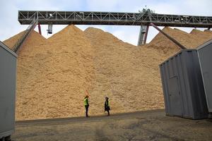 En gigantisk hög träflis som ska förvandlas till kartong i bruket.