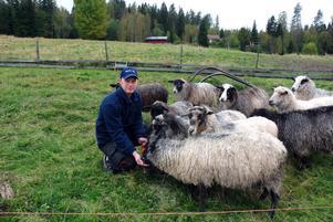 Efter måndagens vargattack vågar inte Marcus Mattsson låta fåren röra sig lika fritt som de är vana vid. Nu får de hålla sig i en mindre hage som han har uppsikt över. På natten tar han in dem.