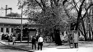 Stadsparken 1971. Almarna var stora redan för 40 år sedan. Då hade arbetsförmedlingens hus ännu inte börjat byggas. Nu 2012 är almarna borta.