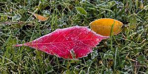 """""""Jag blir lika förundrad varje år över de fantastiska färger som finns i höstens löv"""". Foto: Liselotte Eriksson"""