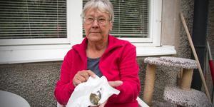 Anette Strandberg undrar om hon ska skicka in den senaste av de döda fåglarna till SVA, Statens Veterinärmedicinska anstalt, eftersom hon minns ett larm för en månad sedan om farliga virus som kan drabba fåglar.