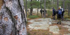 Vandring i Tyresta nationalpark. Foto: Tyresta nationalpark