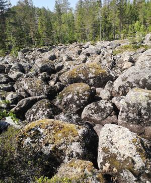 Stenfält med med meterstora rullstenar söder om kanjon skvallrar om kraften i vattenmassorna och mängden transporterat material. foto: Jan Vestin