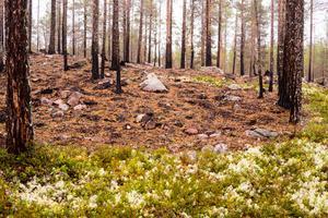 Här tog det stopp för branden på Storbrättan. Det brann på ett cirka tusen hektar stort område sommaren 2018, då det också brann bland annat i skogarna mot Fågelsjö, sydöst om Lillhärdal.