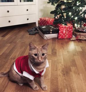 """""""Vår fina katt Mezzi som ger oss så mycket kärlek varje dag. Han är en jättemysig kisse som förgyller våran vardag till max"""". Bilden är inskickad av Maja."""
