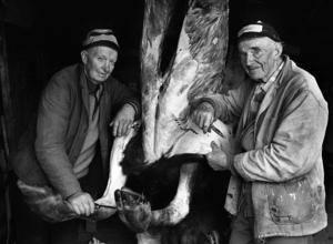 Edvin Wilhelmsson och Erik Björk ur Nordsidans jaktlag med en fälld älg i Lohärad. Bilden togs 1980. Foto: Roine Karlsson
