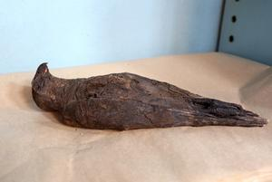 En fågel finns med bland fynden. De begravdes ofta tillsammans med högt uppsatta personer i Egypten. Detta exemplar kan vara en falk eller annan rovfågel.