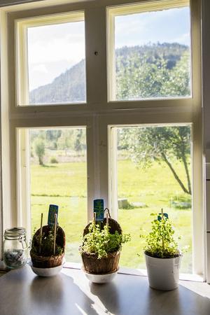 Utsikten från köksfönstret är minst sagt vilsam.
