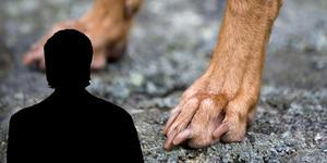 Vårdpersonalen beskriver patientens hundar som som stressade och aggressiva. Hunden på bilden har inget med anmälan att göra.