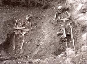 En stor mängd skelett hittades vid den arkeologiska utgrävningen, både i kyrkans tre skepp samt väster och norr om kyrkan. Foto: Länsmuseet.