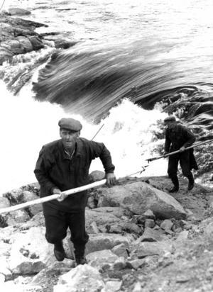 Flottningen var, utan att överdriva, ett mycket hårt jobb. Beroende på väder och vind kunde flottningen emellanåt betyda arbete dygnet runt och även om arbetsgivaren i vissa fall var skyldig att se till att det fanns kojor och baracker att sova i var det inte ovanligt att övernatta i det fria ändra fram till 1950-talet.  På bilden flottarbasen i Ytterhogdal, Nils Jonsson, på språng mellan Krokströmmen och Örastupet i Ljusnan.