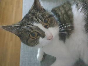 Vår älskade Kitty katt som vi hämtade på katthemmet. Hon finns alltid vid mattes sida. Älskar att gömma sig i kartonger och papperspåsar. Bild: Malin Lindbom